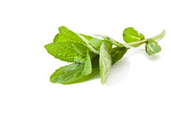Sprig of mint Stock Photography
