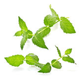 Sprig of mint. On a white background Royalty Free Stock Images