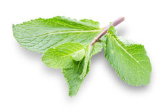 And sprig of mint Royalty Free Stock Photos