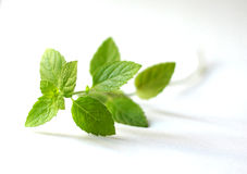 Sprig of mint leaves. Sprig of green mint leaves on a white background Stock Image