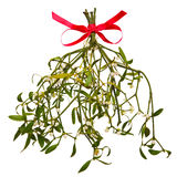 Sprig of Mistletoe isolated Royalty Free Stock Images
