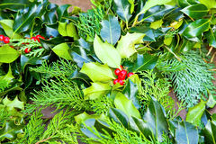 Free Sprig Of Holly Royalty Free Stock Image - 11869846