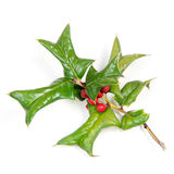 Sprig Of Holly Many Ripe Red Berries Isolated Stock Photos