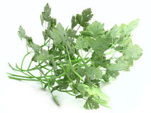 Sprig of Parsley Royalty Free Stock Photos
