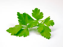 Sprig of parsley Stock Image