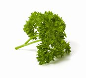Sprig of parsley isolated Stock Photos