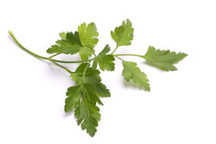 Sprig of parsley isolated on white Stock Images