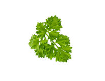 Sprig of parsley Royalty Free Stock Photography