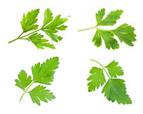 Sprig of parsley is isolated Stock Photography