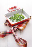 Sprig of parsley Royalty Free Stock Image