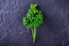A sprig of parsley Stock Photo