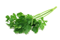 A sprig of parsley Royalty Free Stock Photos