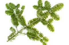 Sprig pine isolated. Green twig of pine christmas theme Stock Photography
