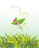 Sprig with pink flowers and grass. Illustration Royalty Free Stock Photos