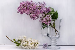 Sprig of purple lilac in a glass glass on a white background Royalty Free Stock Photos