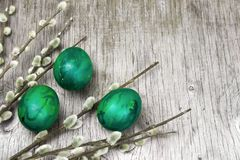 sprig of pussy-willow and eggs painted green royalty free stock images