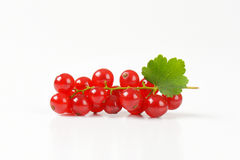Sprig of red currant berries Stock Photo