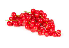 Sprig of red currant Stock Images