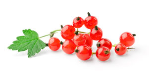Sprig of red currant with leaf Stock Photography