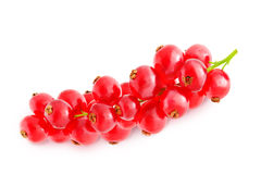 Sprig of red currant. Royalty Free Stock Photos