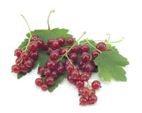 Sprig of red currants with a leaf Royalty Free Stock Photos