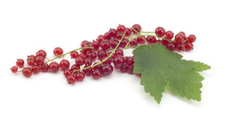 Sprig of red currants with a leaf Royalty Free Stock Photo