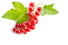 Sprig of red currants Stock Images