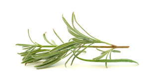 Sprig of rosemary Stock Images