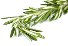 Sprig of Rosemary Stock Photos