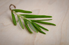 Sprig of rosemary Royalty Free Stock Images