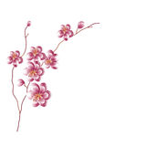 Sprig Sakura- illustration Royalty Free Stock Photo