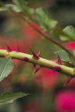 Sprig with spikes on background of greens.Selective focus, toned image, film effect, macro Royalty Free Stock Photography