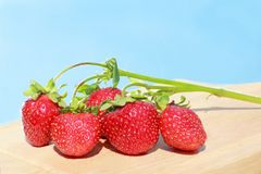 Sprig of strawberries on the sky background Royalty Free Stock Images