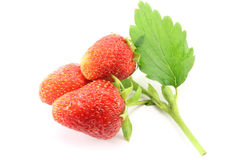 Sprig of strawberries Stock Photography