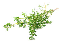 Sprig of thyme. Royalty Free Stock Images