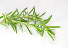 Sprig of thyme Stock Image