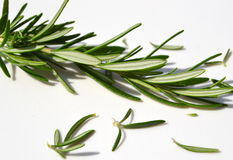 Sprig of thyme on white Royalty Free Stock Photos