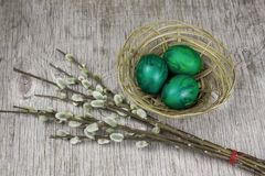 Sprig twig of willow and eggs painted green royalty free stock photo