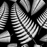 Sprig of white fern on a black background. Stock Photography