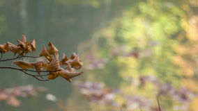 Sprig of wilted leaves stock video