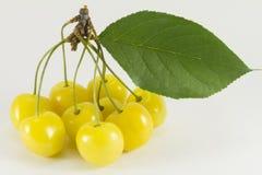 Sprig of yellow sweet cherries Royalty Free Stock Image