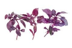 3 sprigs фиолетового базилика на светлой предпосылке Стоковая Фотография