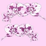 2 sprigs цветя орхидей на розовой предпосылке Стоковые Изображения