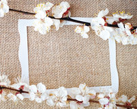 Sprigs of apricot tree on fabric. And frame for text Royalty Free Stock Photography