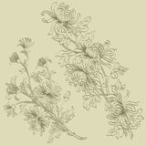 Sprigs of chrysanthemum Royalty Free Stock Images