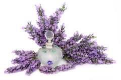 Perfume da flor da alfazema Foto de Stock