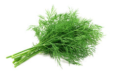 Sprigs of dill Stock Photography