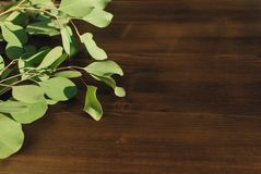 Sprigs of eucalyptus on a wooden surface. royalty free stock photography