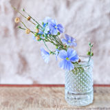 Sprigs of flax with flowers Stock Photography