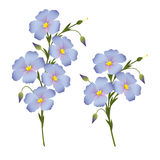Sprigs of flowering flax, design element for labels, packagi Royalty Free Stock Image